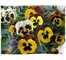 A Flock of Pansies Poster