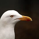 Seagull by Franco De Luca Calce