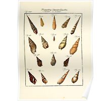Neues systematisches Conchylien-Cabinet - 259 Poster