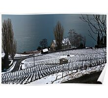 Vineyard on the Lake Poster