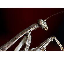 Praying Mantis on red Photographic Print