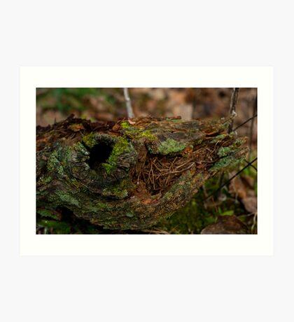 Tree Moss_1 Art Print
