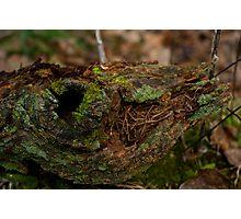 Tree Moss_1 Photographic Print