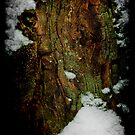Snow Stump_1 by Chip  Ford