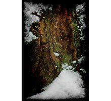 Snow Stump_1 Photographic Print