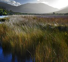 Tidal River Marsh by Mark Higgins