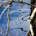 Reflection 02- Pine Barrens, NJ by Aaron Minnick