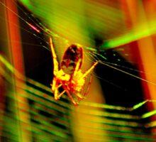 Spider Colour Sticker