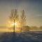 HDR Sunlight Through Trees