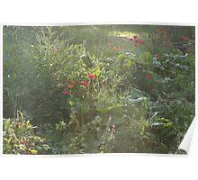 wild cottage garden in the evening Poster