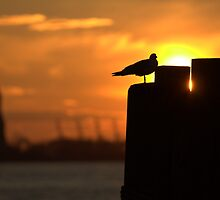 Bird at Statue of Liberty by EHRETic