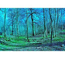 'Magic woodland' Photographic Print