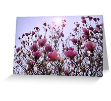 Soft and Sweet Greeting Card