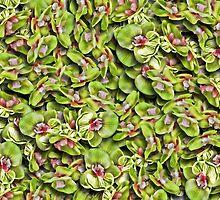 Green Orchid Duvet by GolemAura