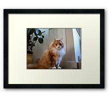 Max Framed Print