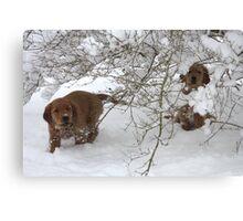 Peek A BOO Pups- 10 Canvas Print