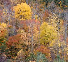 Fall Colors in Eastern Kentucky by Kent Nickell