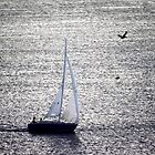 Sailing The Shimmery Sea by Jim Haley