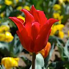 Floriade in Canberra by Trish Kinrade