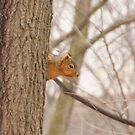 Peek a boo by tcat757