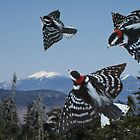 Flight of the Woodpeckers by maxy
