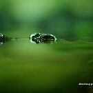 Croc Eyes - Melbourne Zoo Series by dazzleng