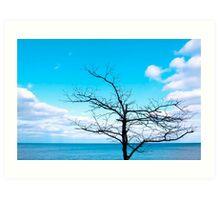 Tree by Lake Michigan Art Print