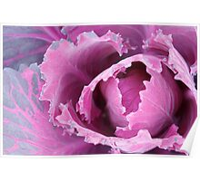 Pink cabbage Poster