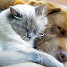 Pali and Roger the cat sharing the love by gillyisme53