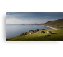 Sheep at Rhossili bay Canvas Print