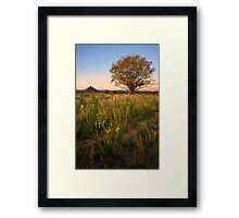Lone Willow Tree Framed Print