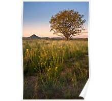 Lone Willow Tree Poster