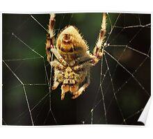 Mr. Spider Poster