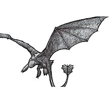 Toothless Sketch Photographic Print