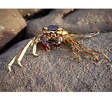 Crab shell, Panasonic GF1 14-45mm Lens Photographic Print