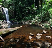 Curtis Falls, Mt Tamborine by DarvidArt