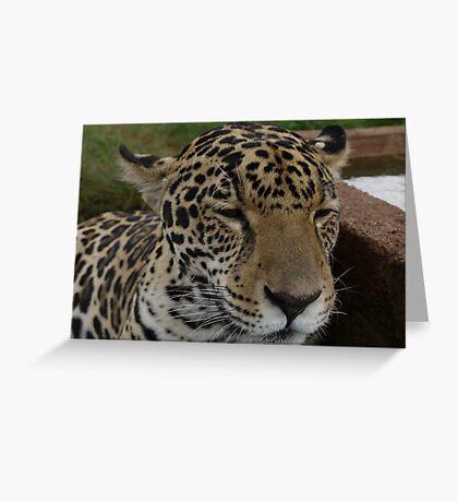 Jaguar Panasonic GF1 14-45mm Lens Greeting Card