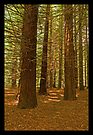 Carpeted Forest - Downstream of Stevenson Fall by mspfoto