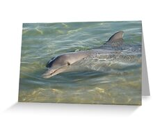 Dolphin at Monkey Mia Greeting Card