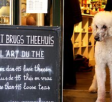 Poodle (Tea) Parlour. Bruges, Belgium. by David Dutton