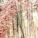 Through the red woods by Vicki Field