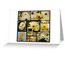 A Barrage of African Daisies Greeting Card