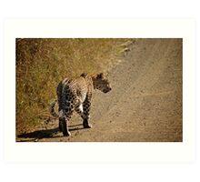 On The Prowl - Kruger National Park Art Print