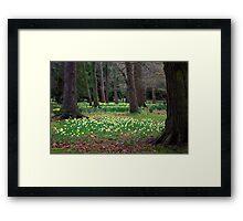 Daffodill Wood Framed Print
