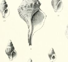 Manual of the New Zealand Mollusca by Henry Sutter 1915 0081 Vexilam Cantharus Sticker