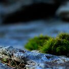 Clumps of Moss by Aaron Campbell
