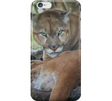 Facing Extinction - Florida Panther iPhone Case/Skin