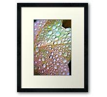 Droplets - October 2009 Framed Print