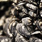 Mussels On A Rock by sunrisern