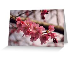 February blossoms Greeting Card